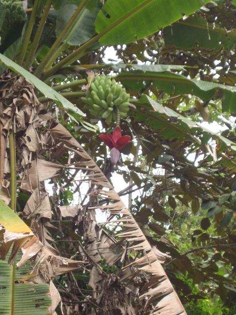 IMG_1698_Kostaryka